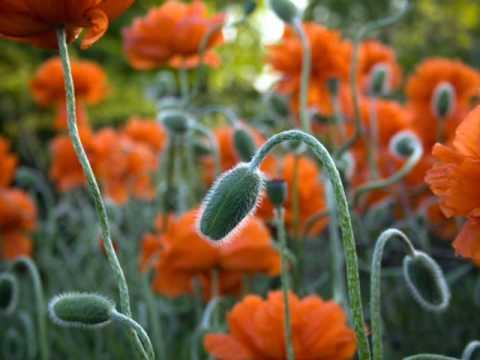 Fergek a viragfoldben SOS! Mik mozognak a virágföldben?