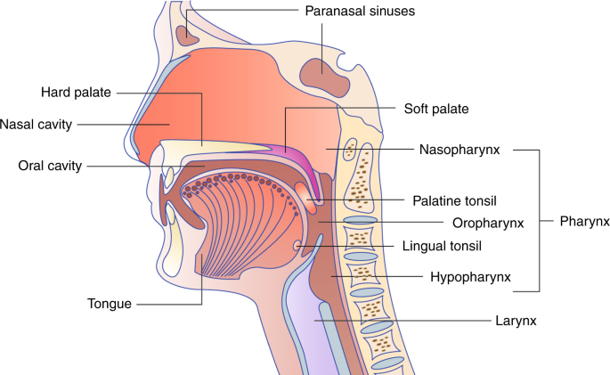 humán papillomavírus l lizin