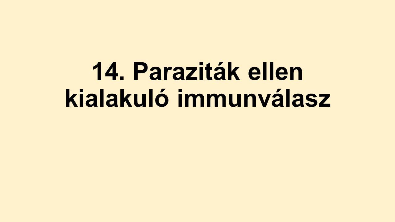 immunválasz a protozoon parazitákra