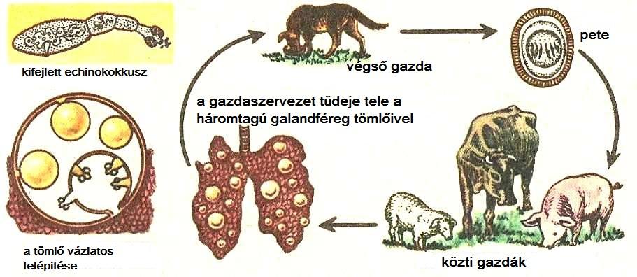 jellegzetes parazita férgek)