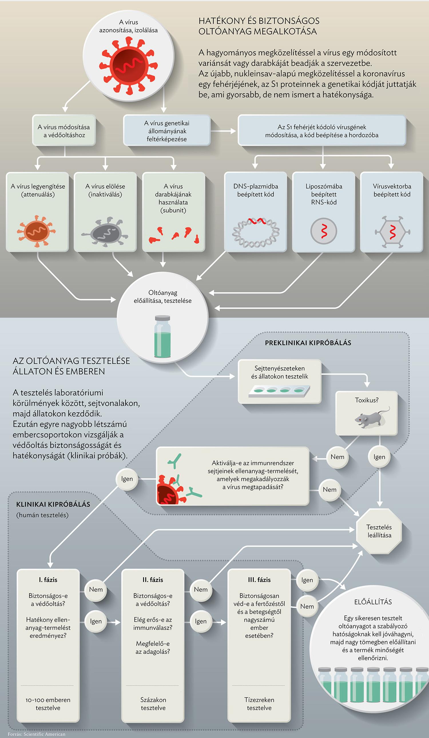 papilloma vírus elleni vakcina emberben)