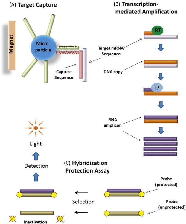 papillomavírus dna nyaki condyloma kezelése