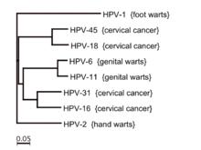 papillomavírus hpv 51