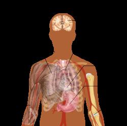paraziták kezelése és tünetei az emberi testben)