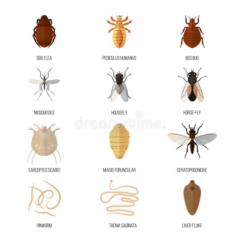 Pinworms hányás, FUUUUUJ!!! paraziták a testben gyógyszerek
