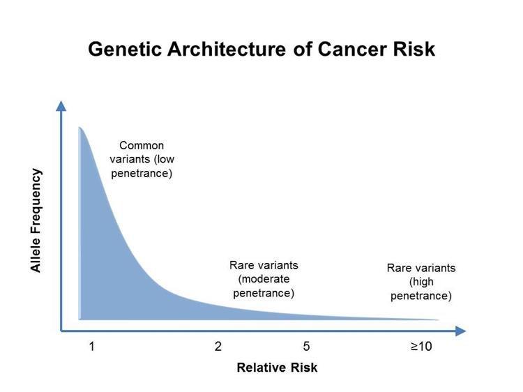 Öröklődés, genetikai vizsgálatok | receptadatbazis.hu