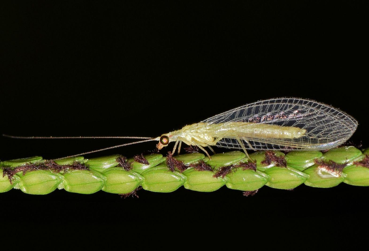 rovarok elleni hazai gyakorlat