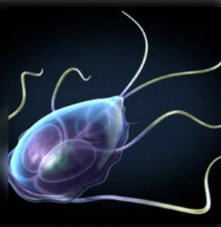 a féreg termékenysége a paraziták megelőzése felnőtteknél