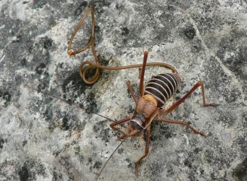 a meztelen csigák paraziták)