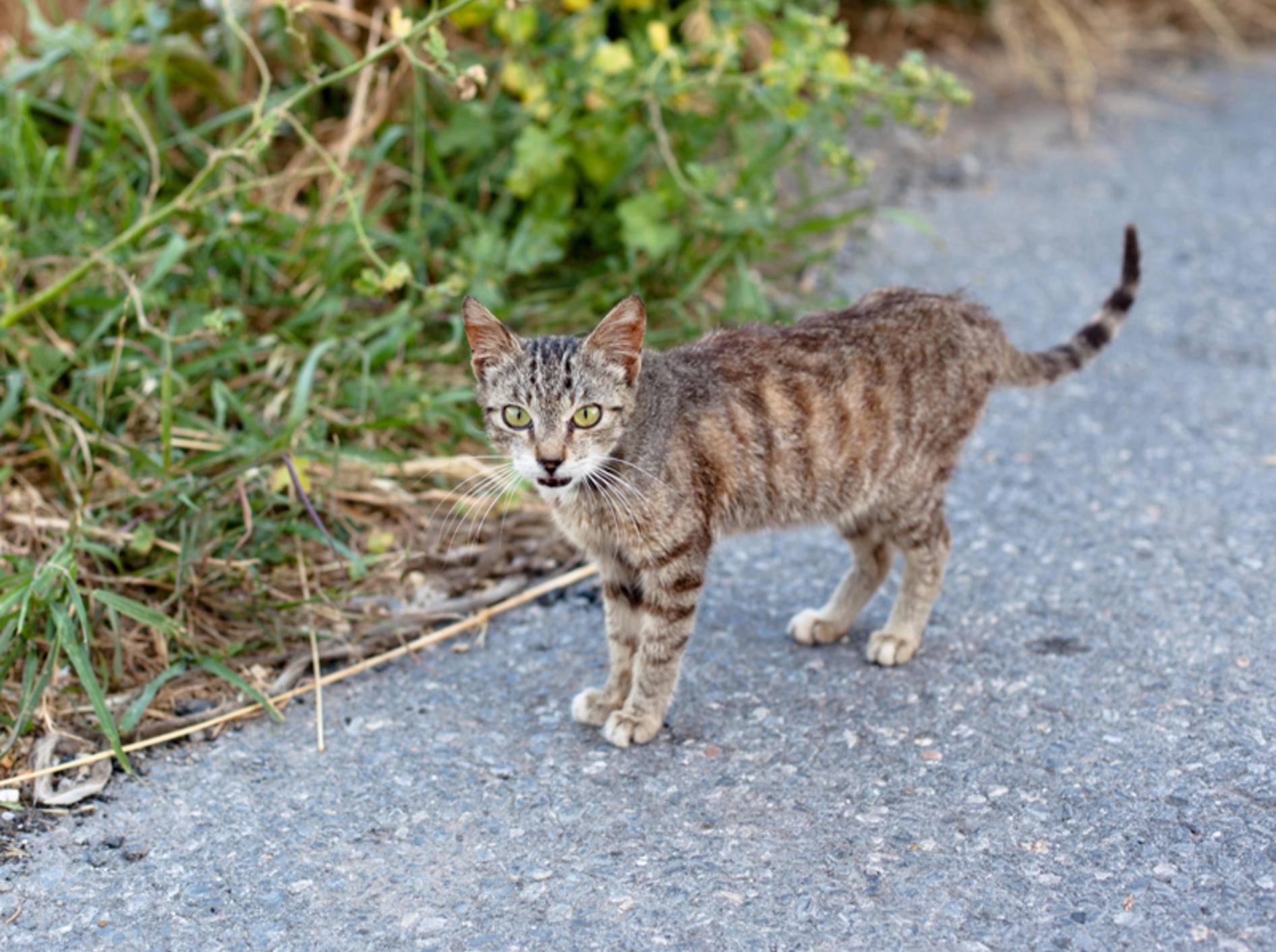 behandlung von giardien bei katzen)