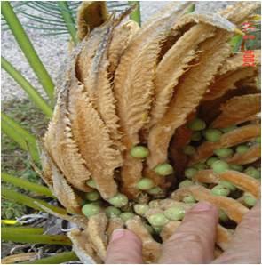 Pinworm drog, Férgek kezelése a pinworm kerekesférgeket
