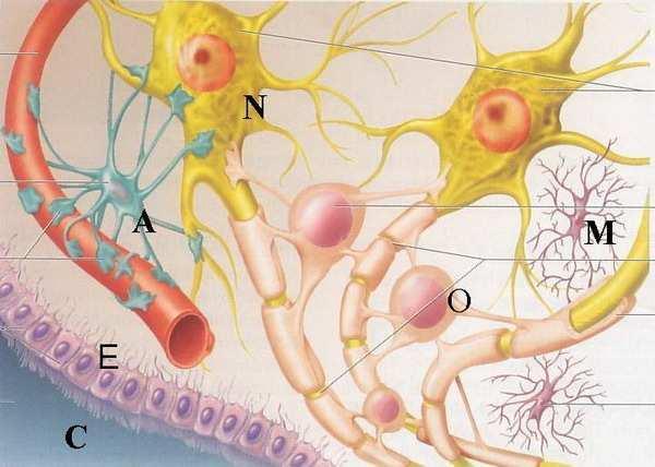 a helix enterobiosis összenyomódik)