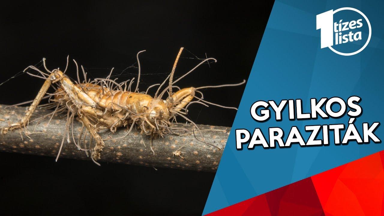paraziták háttérkép a bőr parazitáinak tünetei