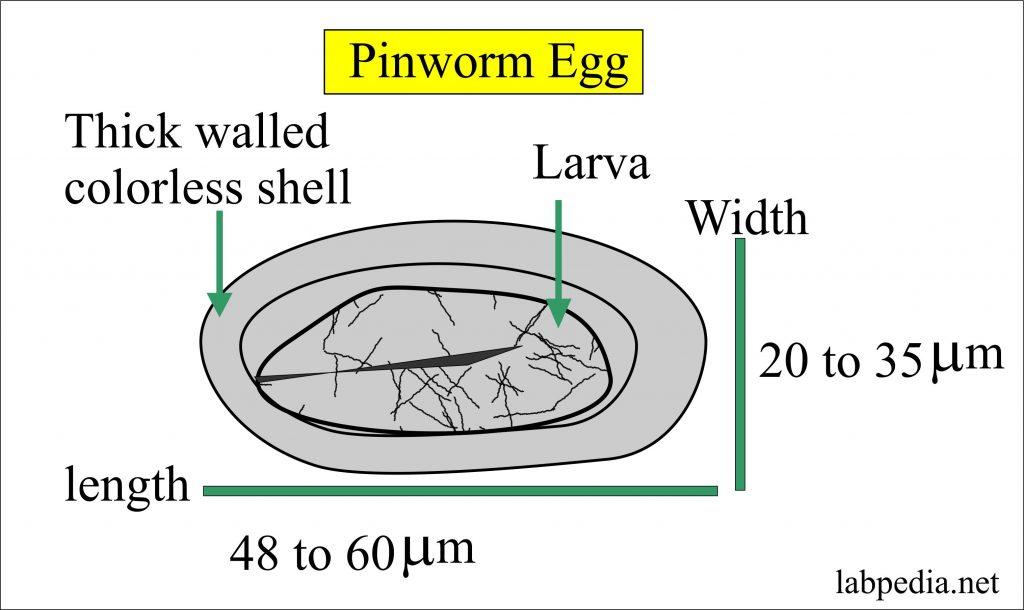 az eozinofília paraziták diagnózisa