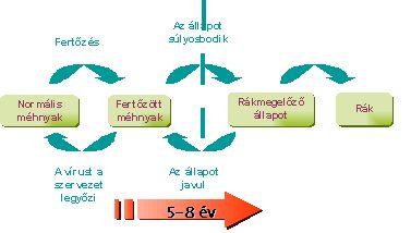 hpv rákos sejtek kezelése)