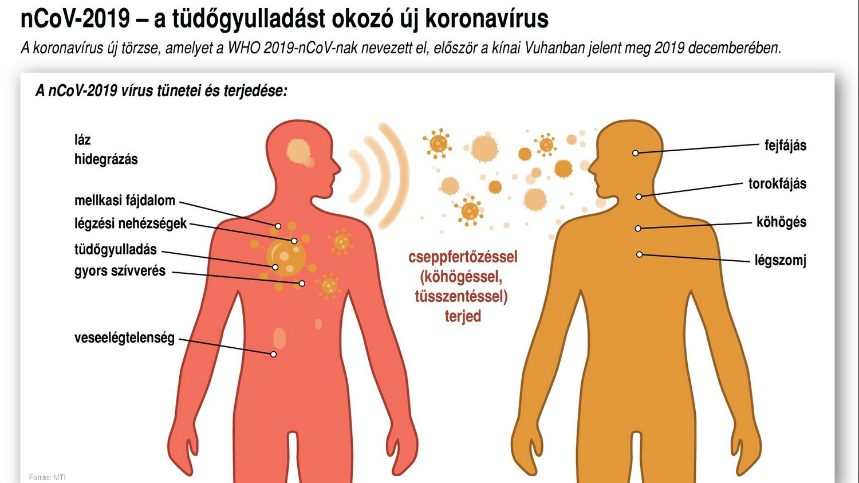 Koronavírus kutyáknál - Átvitele, tünetei, megelőzése, kezelése | Zooplus