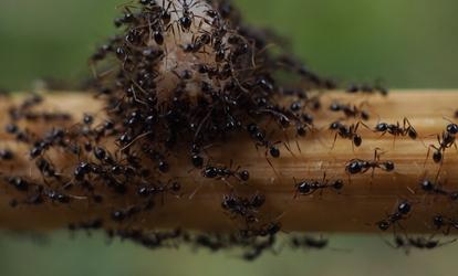 a grapefruitmag csöpög rovar méregtelenítő test receptek