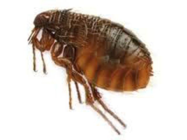 paraziták :: Rexrendelő