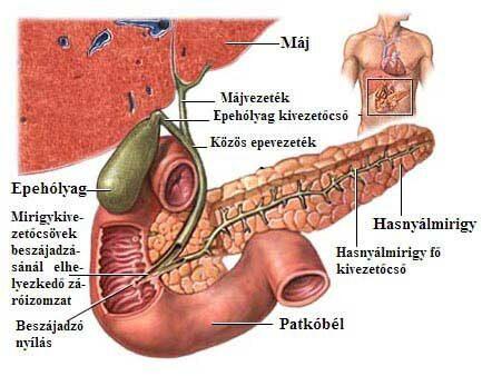 epevezeték rák tünetei Ők örökre szemölcsök
