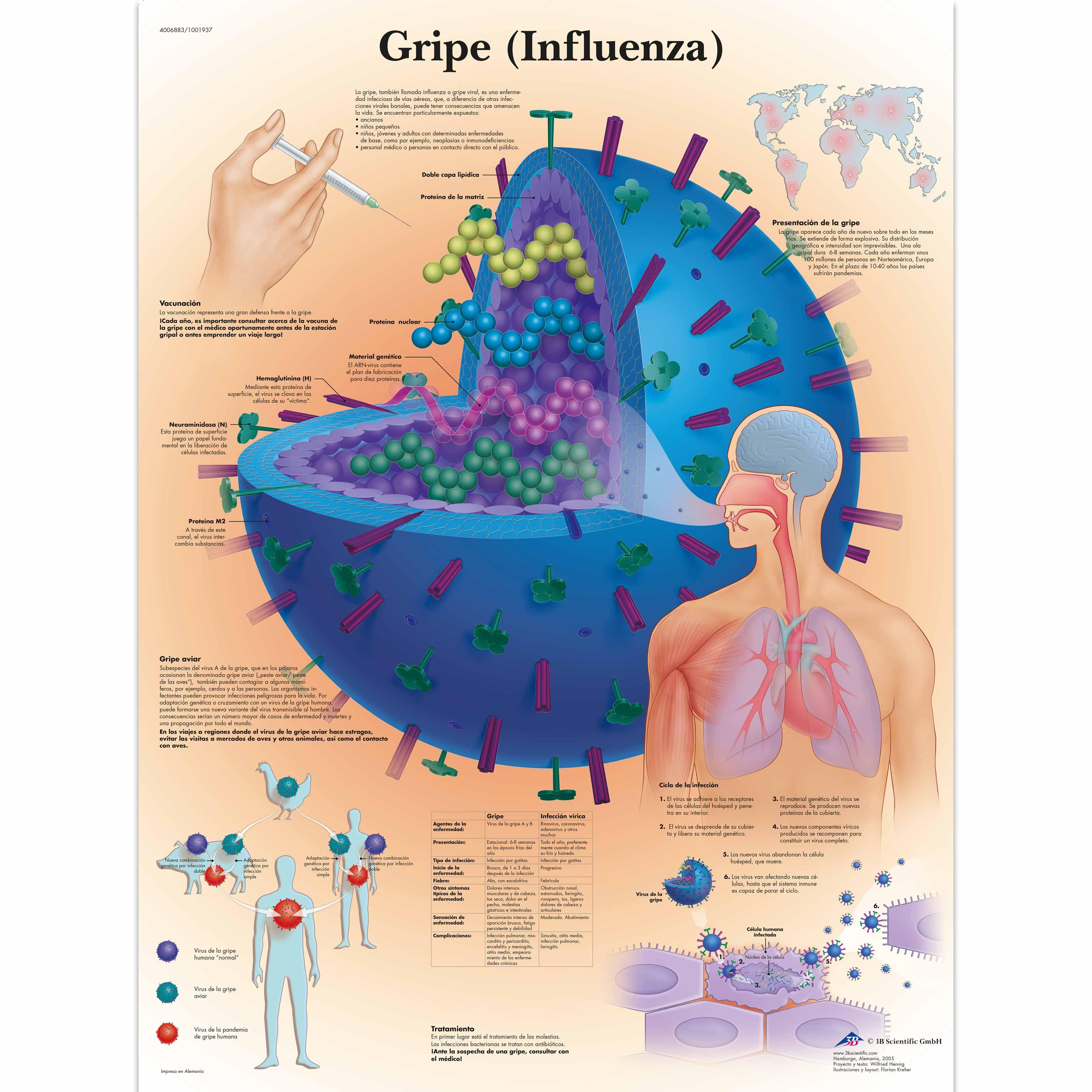 bakteriális vírus)