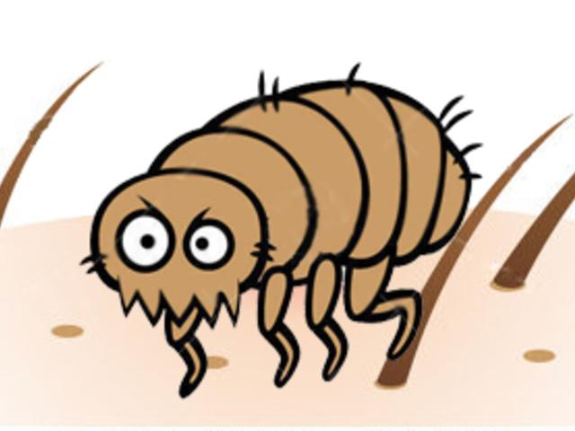 Mikroszkopikus bőr paraziták. 9 félelmetes élősködő, ami akár benned is ott lehet