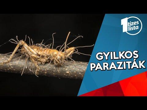 parazita helmintikus organizmusok)