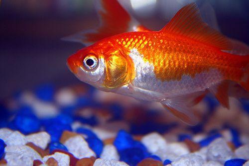 halak parazitákkal történő forgalmazása mi a helminthiasis és hogyan kell kezelni