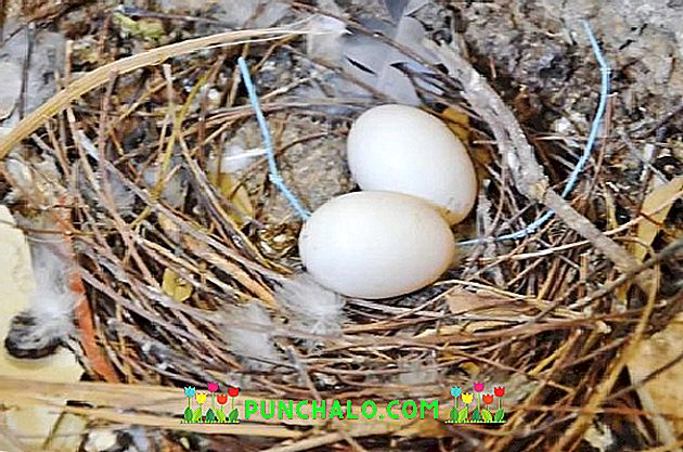 rendeljen felső tojást hpv gardasil után