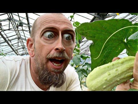 uborkák kezelése paraziták ellen